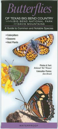 Butterflies of Texas Big Bend Country-- Laminated